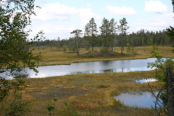 A view of the bog by the UKK trail.