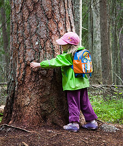 A girl measuring a magnificent old pine tree. Photo: Markus Sirkka