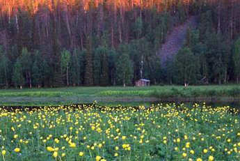 Haaraniitty meadow. Photo: Jyrki Mäkelä