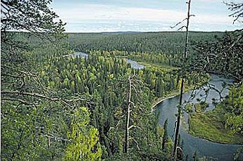 The River Kitkajoki. Photo: Seppo Laakso