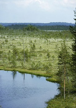 Haapasuo Mire. Photo: Timo Nieminen