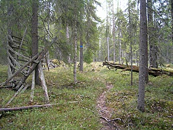 Remains of an old reindeer fence in Vieremänsuo Mire Reserve. Photo: Heikki Susiluoma