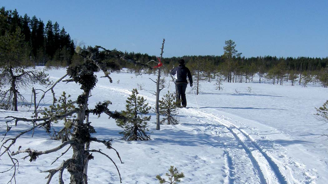 Leivonmäki skiing trail takes you to varying mire and esker landscapes. Photo: Terhi Salomaa.