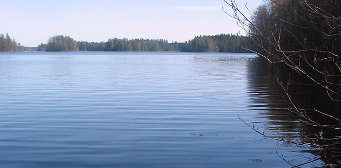 Calm lake in the summer.