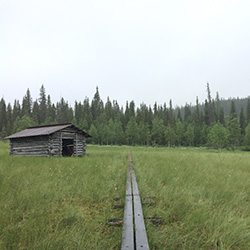 A wooden footpath across a meadow, a log barn can be seen on the meadow. There is forest in the background.