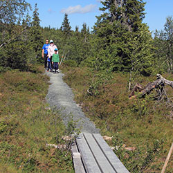 A family walking along a gravel path towards the photographer. The path is surrounded by coniferous forest.