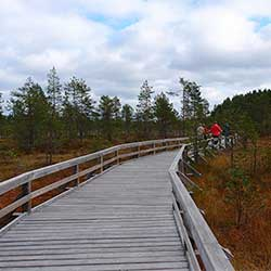 The Saari-Soljanen nature trail is accessible by wheelchair and to prams. Photo: Hanna Aho