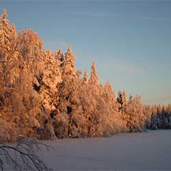 A winter morning by Lake Ahvenlampi. Photo: Tuulikki Halla
