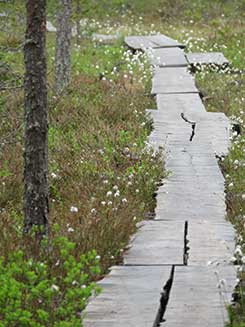 Duckboards on the Harjupolku trail in the Seitseminen National Park. Photo: Johanna Väkeväinen
