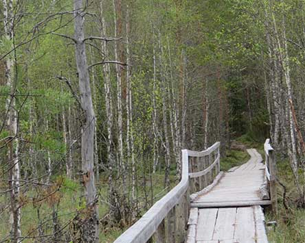 A bridge on the Torpparintaipale trail. Photo: Johanna Väkeväinen
