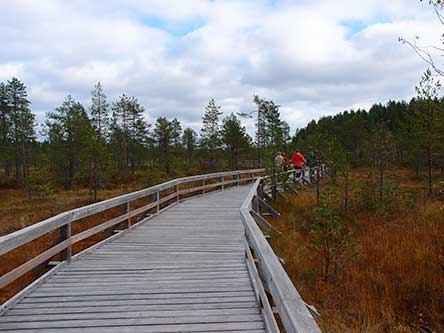 The Saari-Soljanen nature trail runs through a beautiful mire landscape. Photo: Hanna Aho