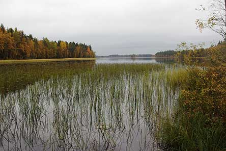 Autumn view from the lean-to shelter by Lake Liesijärvi. Photo: Sanna-Mari Kunttu