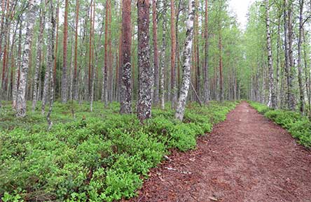 The Virkatie trail towards Lake Iso-Kivijärvi. Photo: Johanna Väkeväinen