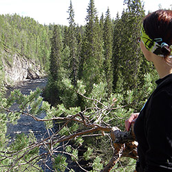A hiker standing in front of a small coniferous tree looking towards the canyon.