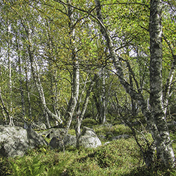 Deciduous forest in the summertime.