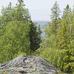 A sea landscape opens up behind the treetops seen from a tall rock.