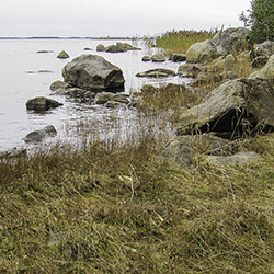 A grass-covered shore with large boulders.