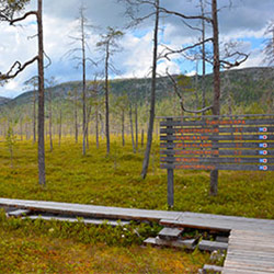 Tunturiaapa mire colours and fell sceneries from the birdwatching tower. Image: Mari Kotajärvi