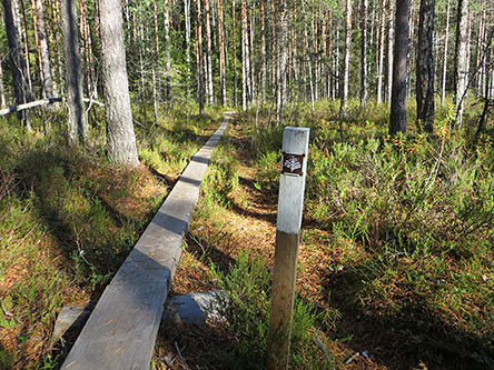 Kaarniaispolku Nature Trail is marked with brown cone signs. Photo: Laura Lehtonen