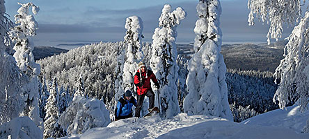 Snowshoe walking is a popular activity in Koli. Photo: Markku Tano