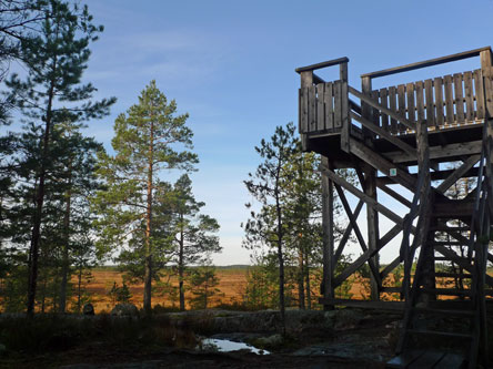 Koivusaari observation tower. Photo: Hanna Kaurala