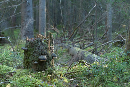 Pukkipalo old-growth forest. Photo: Tapio Tuomela