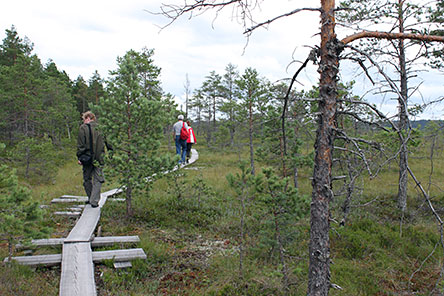 Hikers on Torronsuo Mire. Photo: S-M Hiukkamäki