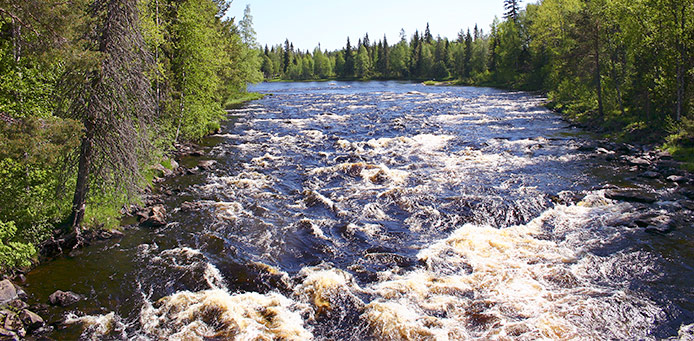 A flowing rapid in a sunny summer day with trees growing onshore.