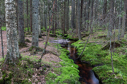 A forest brook in Teijo. Photo: Jari Kostet