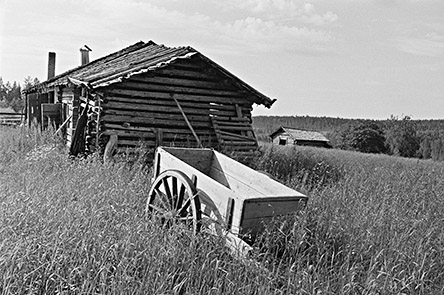 The cow shed of Levävaara in the 1960s. Photo: Martti Montonen
