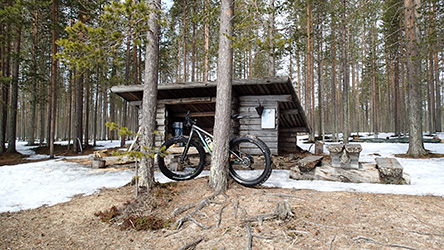 A fatbike rests against a pine in front of a windbreak. Although it is spring, there is snow on the ground.