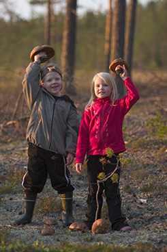 Mushrooms grow in the autumn. Photo: Hannu Huttu