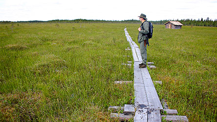 On the duckboards of Kivalonaapa mire. Image: Juha Paso