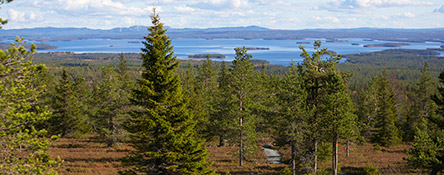 Kitkajärvi lakes seen from Riisitunturi National Park. Photo: Mari Limnell