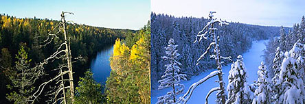 The landscape changes throughout the seasons. Helvetinjärvi National Park. Photo: Timo Nieminen