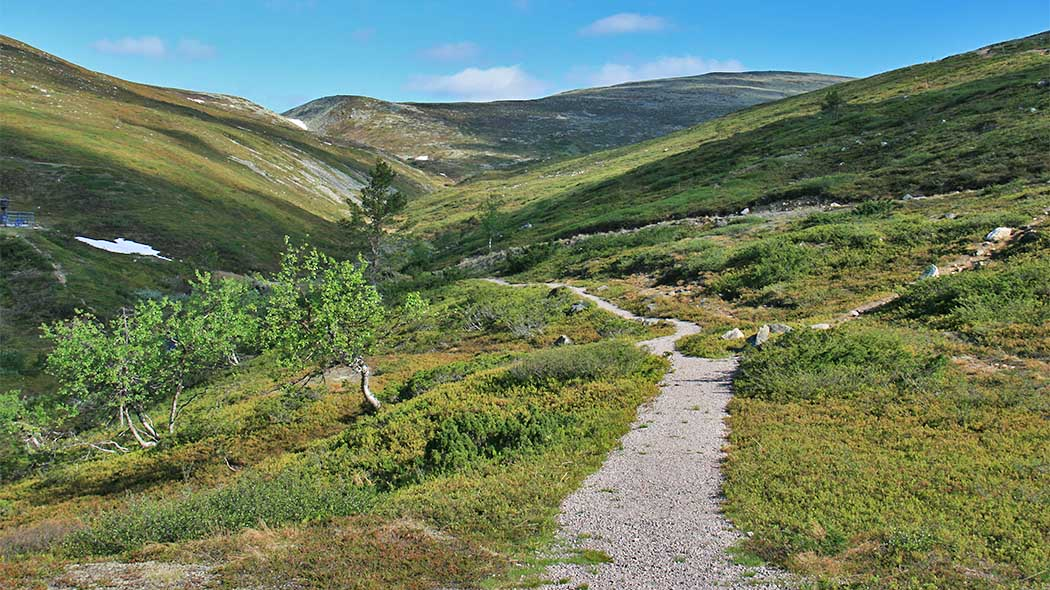 Trail to the fells. Photo: Maarit Kyöstilä.