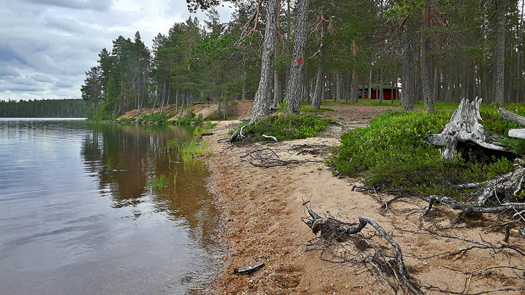 A sandy lake shore with large pines. A trail along the shore is marked on pine trunks with red paint dots and there's a red building in the background at the shore.