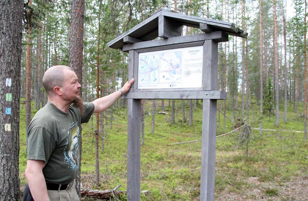 A hiker examining an information board in the forest. One of the pine trees has trail markings in it.