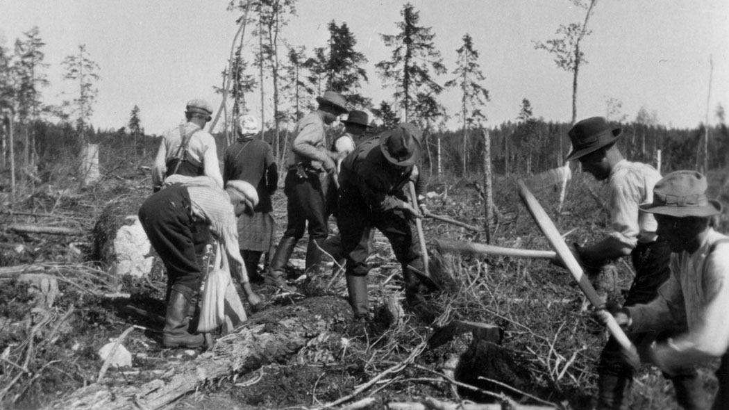 A black and white photo of men working in a clearcutting area.