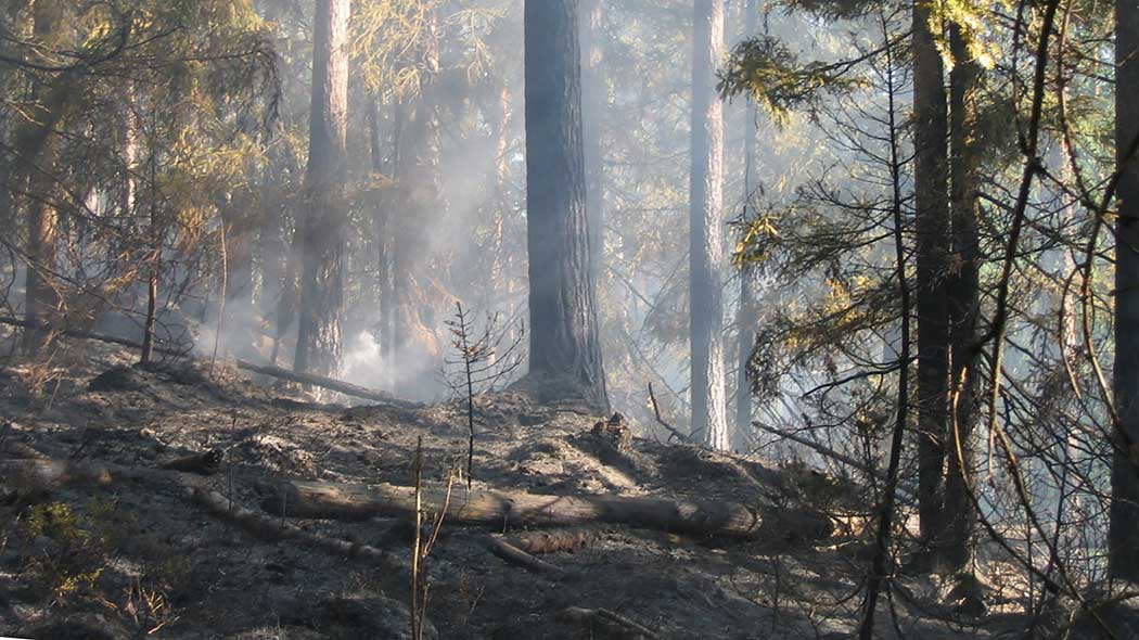 The forest floor is still smouldering after a forest fire.