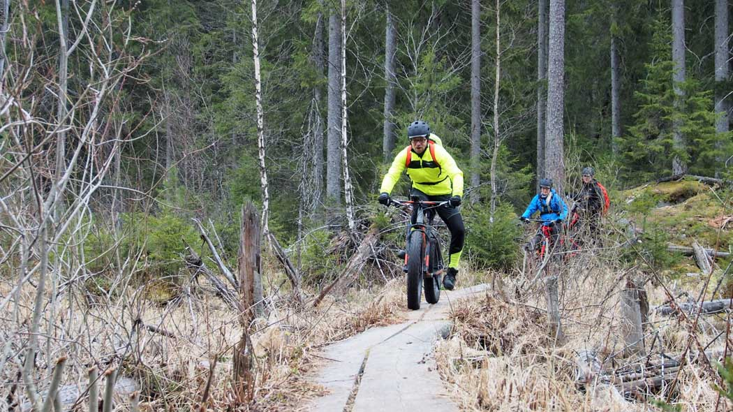 Three bikers with fatbikes on duckboards in the woods.