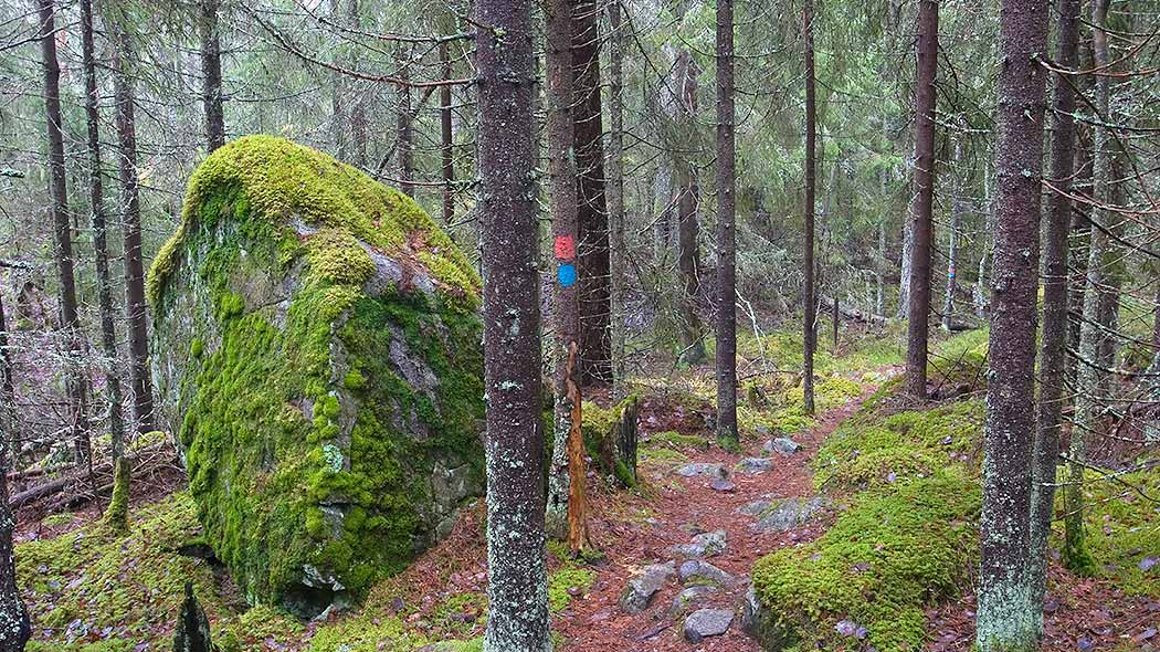 A trail in the woods. On the left side of the trail is a large moss-covered boulder, and a tree with trail markings.