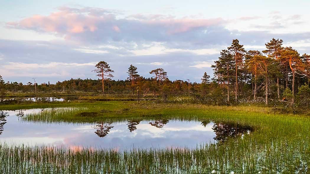 Activities in Kauhaneva-Pohjankangas National Park - Nationalparks fi
