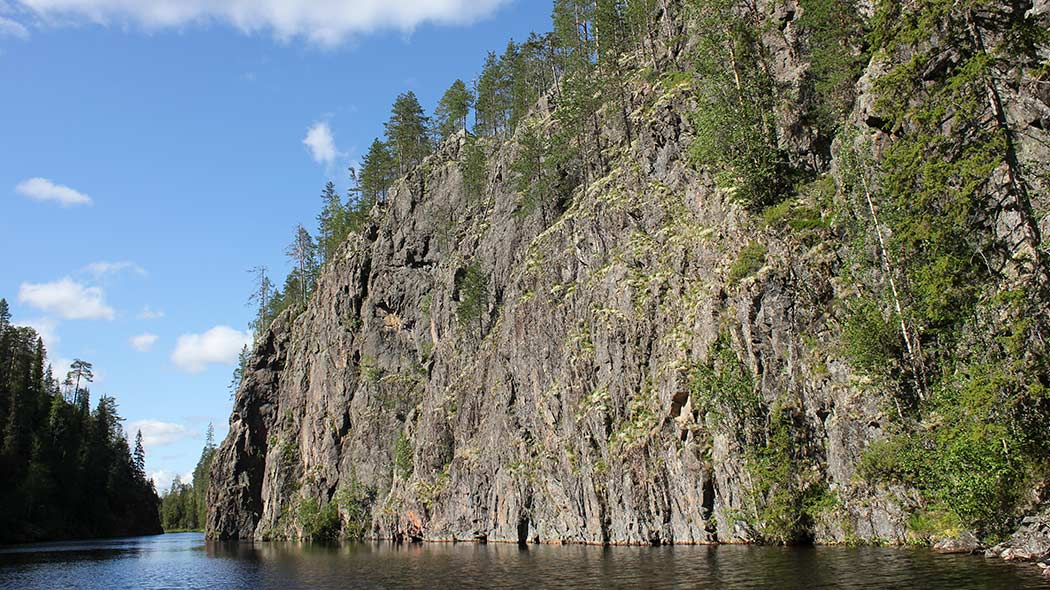 A steep cliff wall rises almost vertically from a lake. Birch trees are growing on the cliff wall.