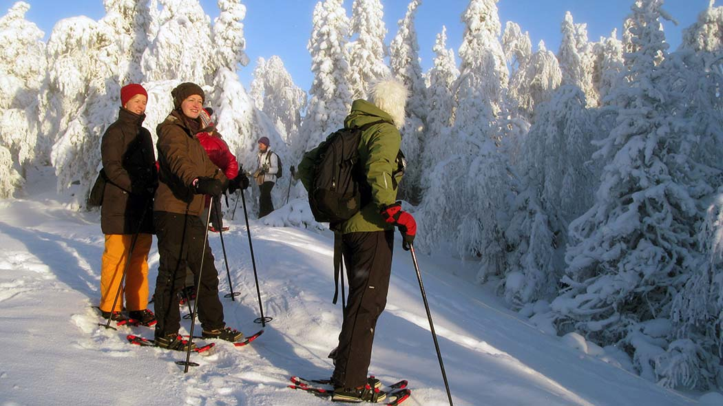 Hikers with snowshoes are walking in a winter landscape. Snow-covered trees rise in the background.
