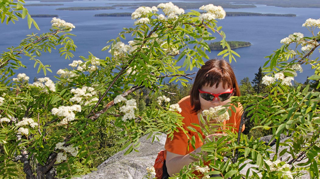 A woman is observing a flowering rowan tree growing on some cliffs. Lake landscape can be seen in the background.