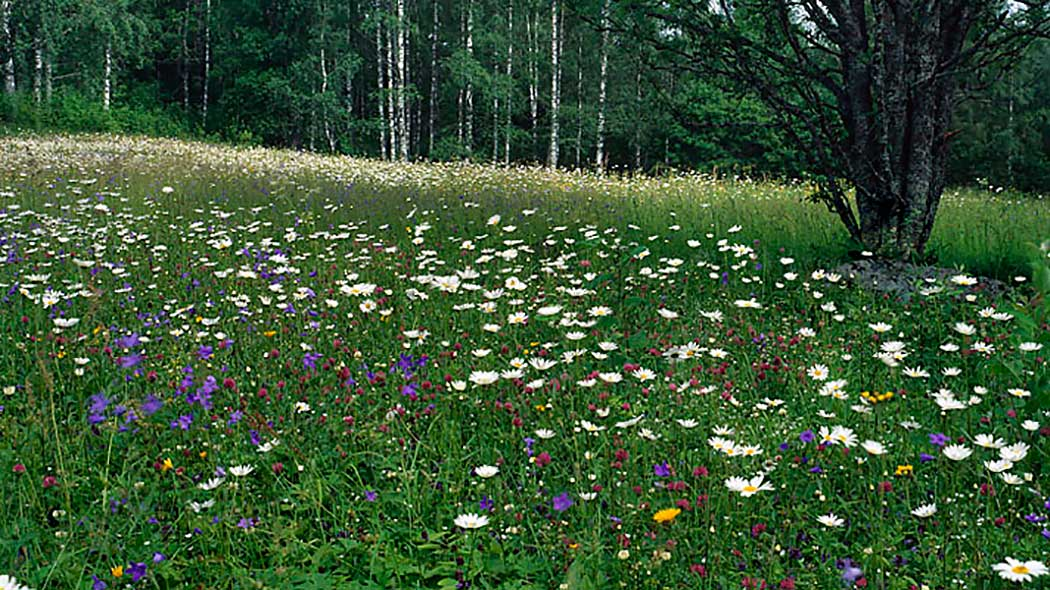 Many different flowers are growing freely in a meadow.
