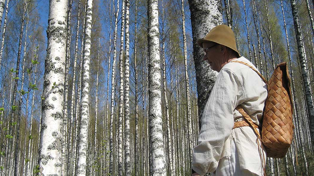 A guide is out on a tour and is standing in the shade of a birch tree. The guide carries a traditionally made birch-bark backpack.