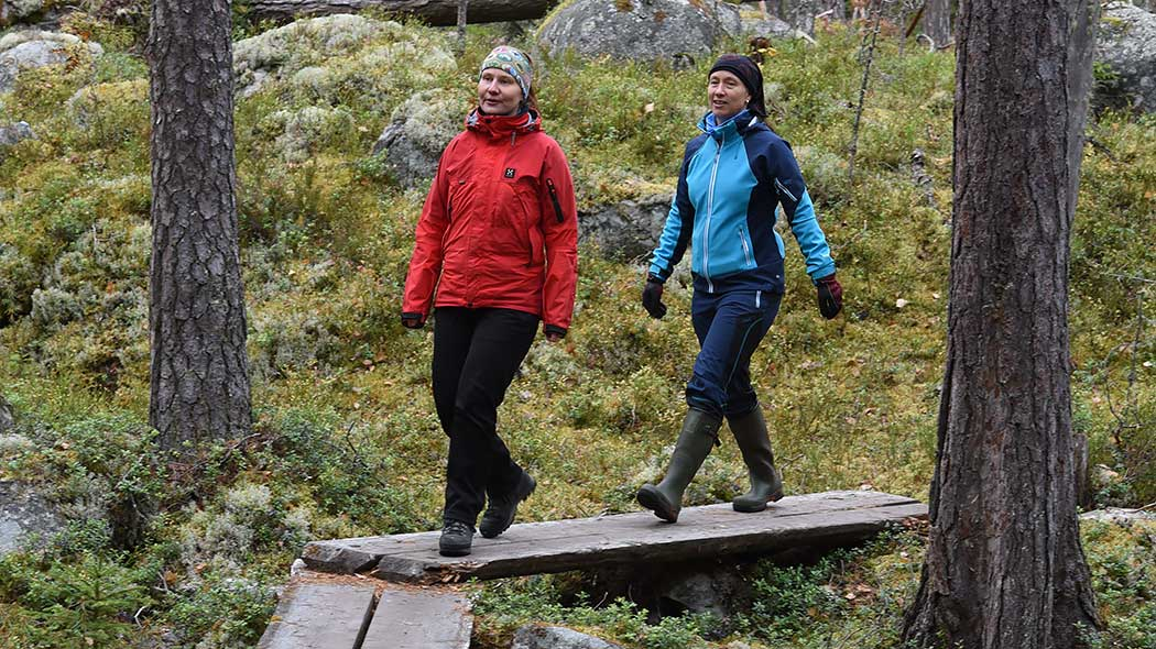 Two hikers on wooden footbridges in an autumn forest.