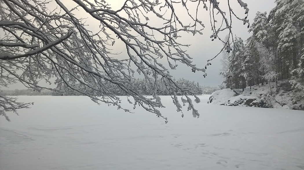 Winter landscape. Snow on the tree´s branches and also snow on the lake.